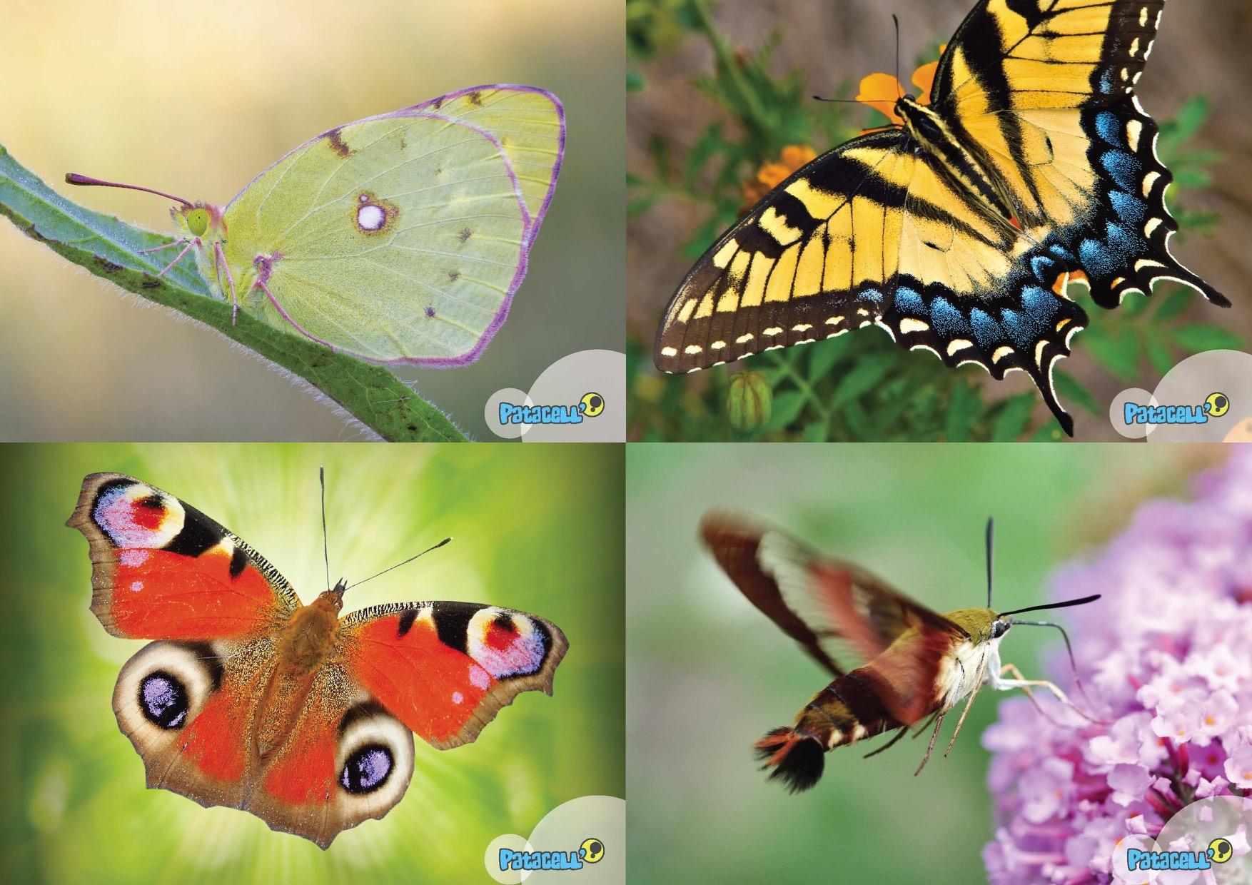 Jeux_des_papillons_Page_1